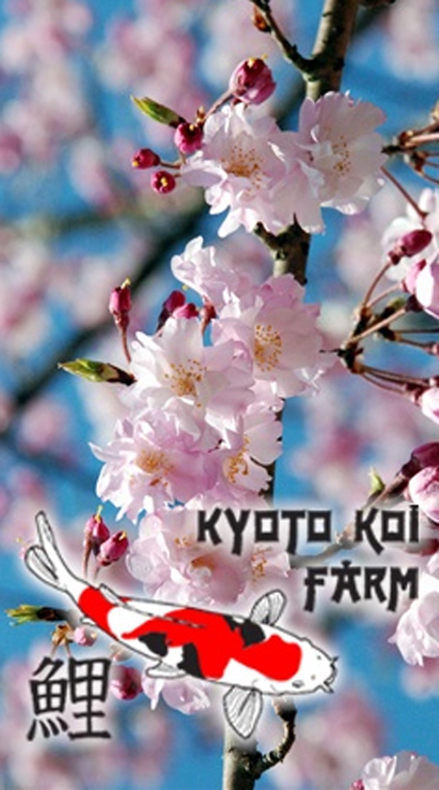 Kyoto-Koi-Farm.jpg